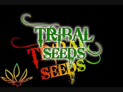Tribal Seeds at Mountain Winery Amphitheater